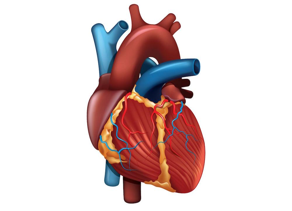 The Healthy Heart Check - Dr. Ali Hamaad